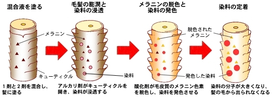 ヘアカラーの仕組み